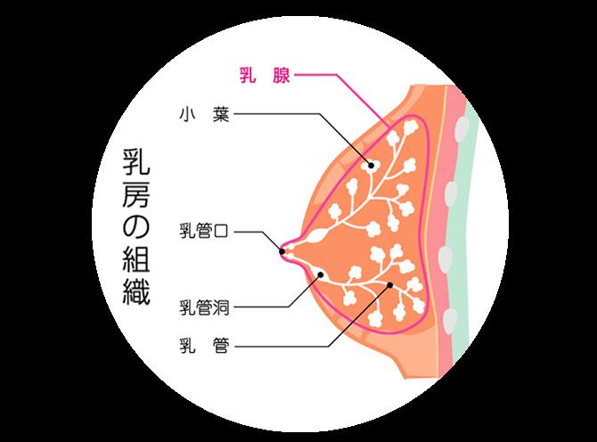 にゅうりん かゆみ